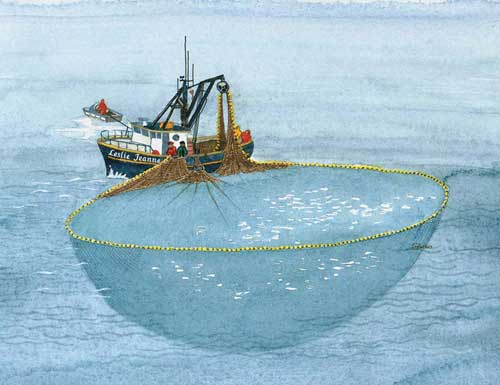 Purse Seine Boat Pursing