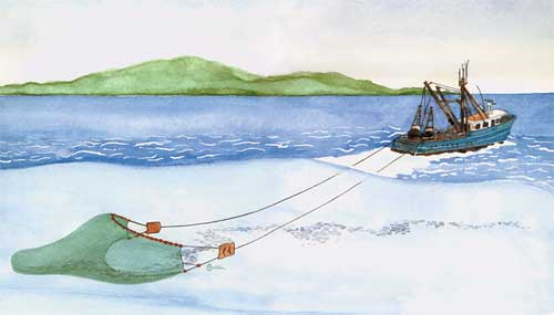 Trawler Vessel Fishing